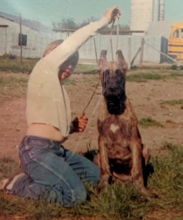 Our experiences raising dogs began with Great Danes